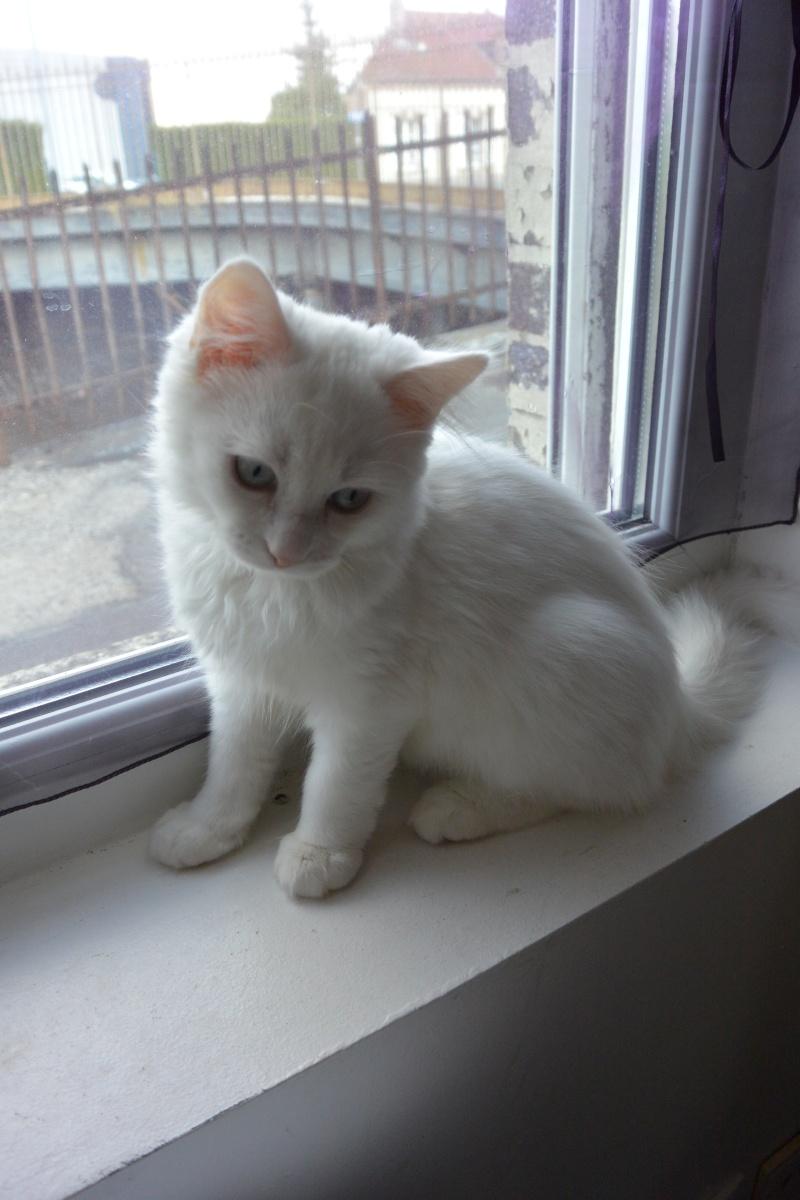 Photos des chats sauvés, avant/après - Page 2 Dsc_0412