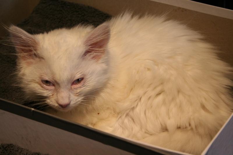 Photos des chats sauvés, avant/après - Page 2 Img_5310