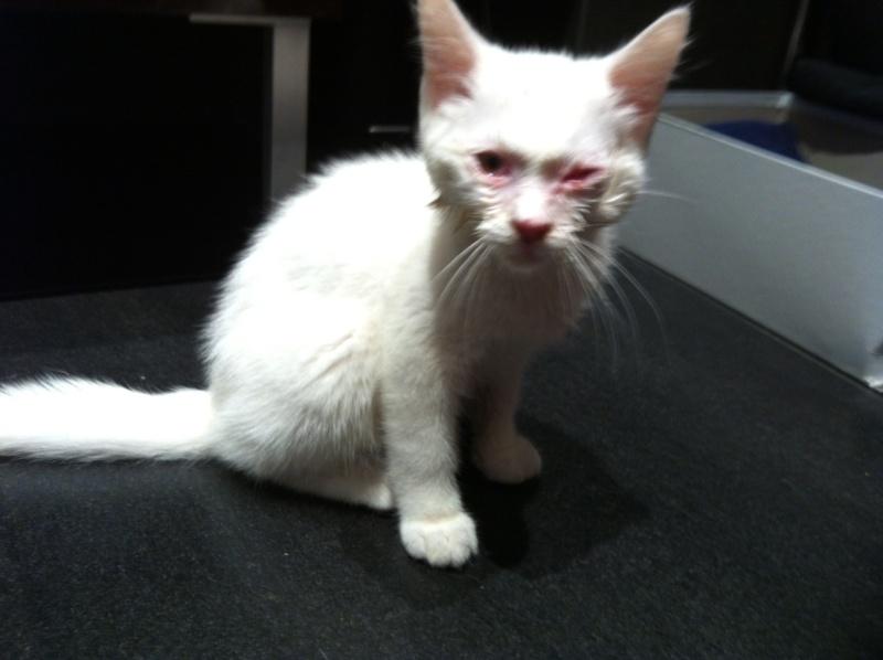 Photos des chats sauvés, avant/après - Page 2 Lutti10