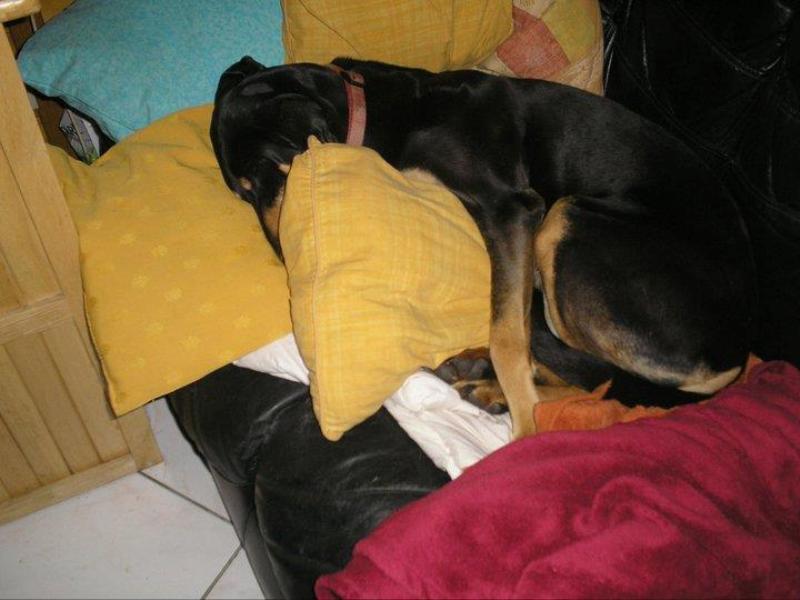 Posture originale pour dormir....et chez vous c'est comment??? Ca_man10