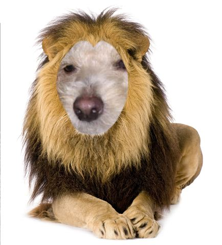 Ze m'appelle Lion Dscn6010