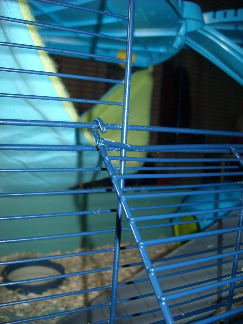 2ème porte sur cage freddy 2 max Dscn2618