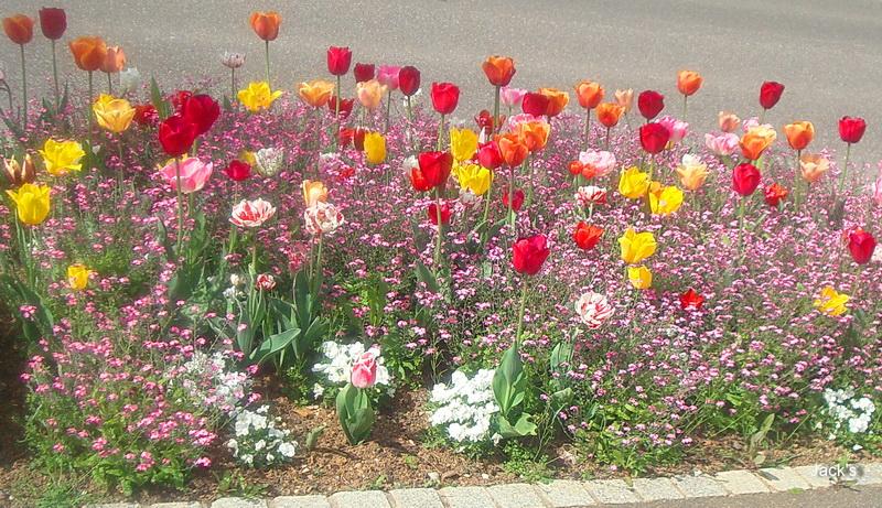 Hibiscus d ' Egypte  ( et autres fleurs ) - Page 2 Dsc08111