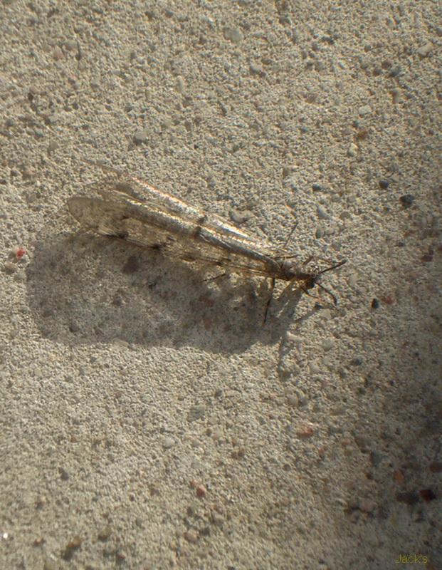 La mante religieuse et autres insectes Insect10