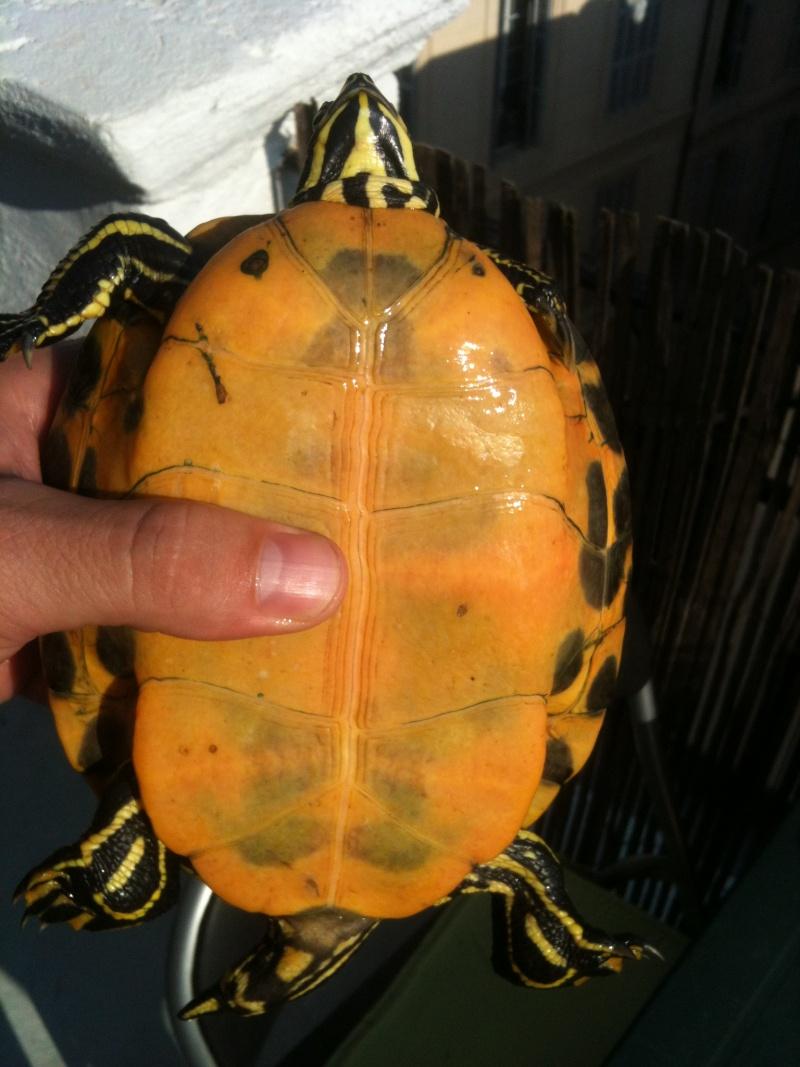 Besoin d'avis pour identifier ces 3 bb tortues aquatiques 15410