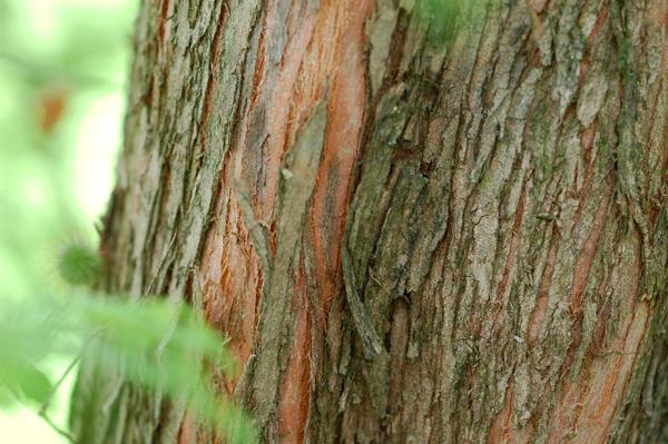 Ecorces d'arbres  Metase10