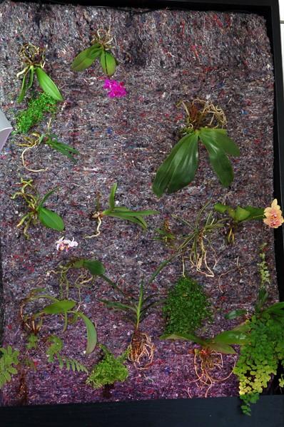 mur végétal (intérieur) Mur11