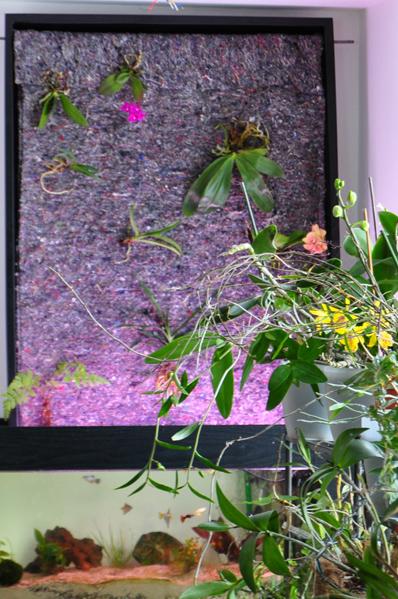 mur végétal (intérieur) Mur_1110