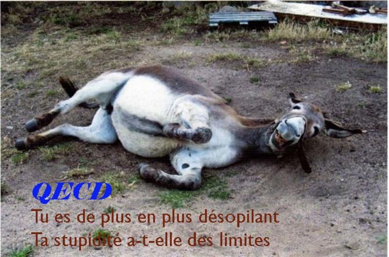 Le corps mystique de l'âne de JESUS! L_ane_10