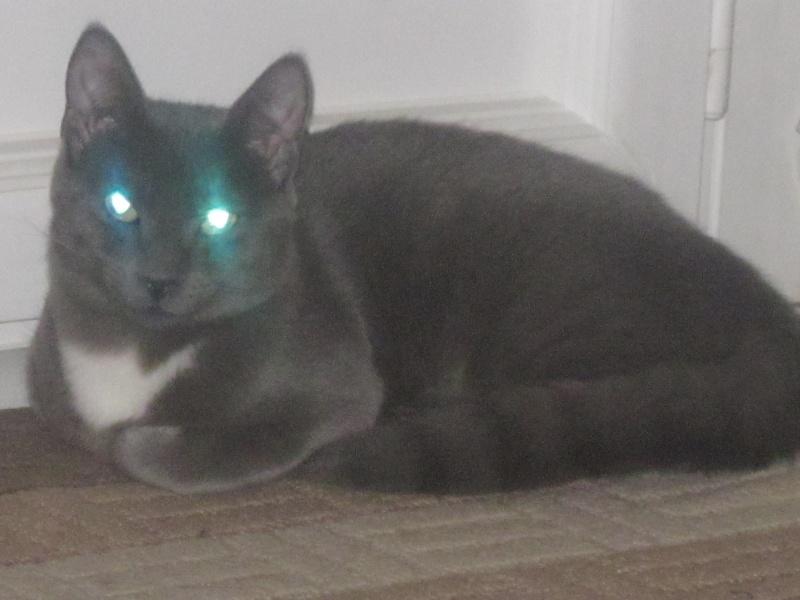 Minuit, un chaton en progrès Img_1110