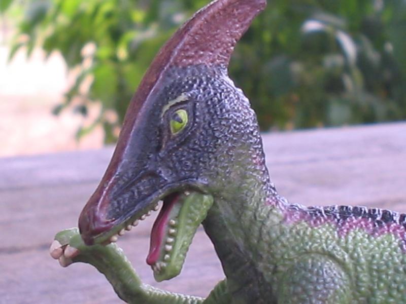 voxosaure et tour de guet HL Img_4225