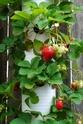Огородный креатив Btr4jp10