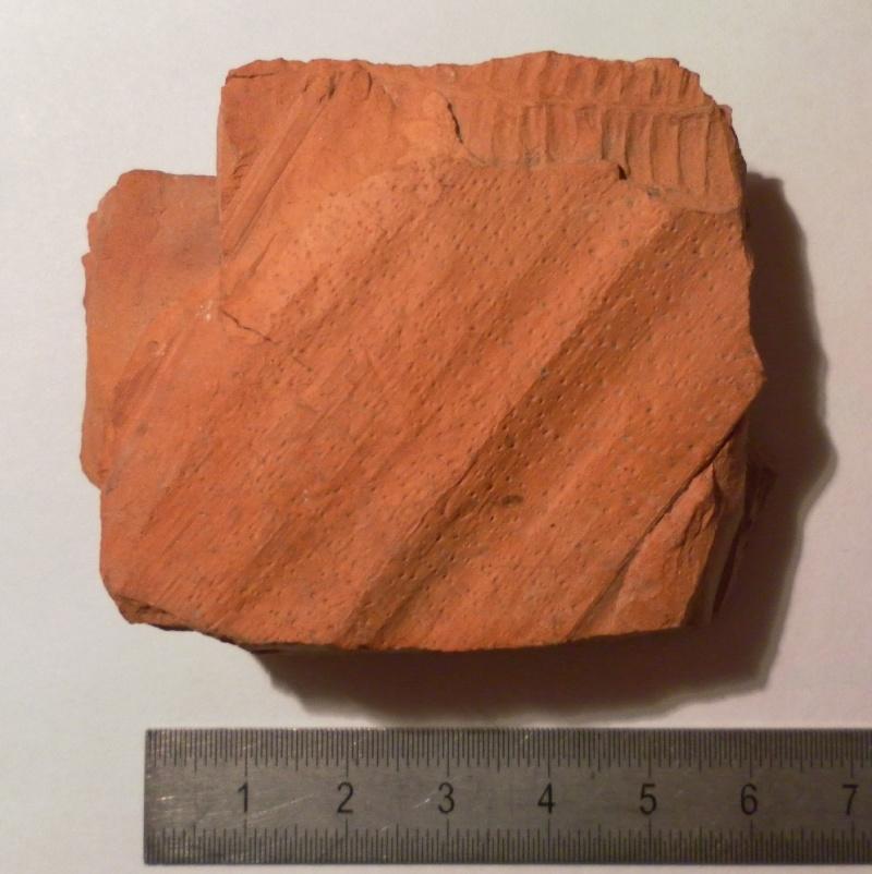Spécimens à identifier (samples that need identification ) - Page 3 Pecopt13