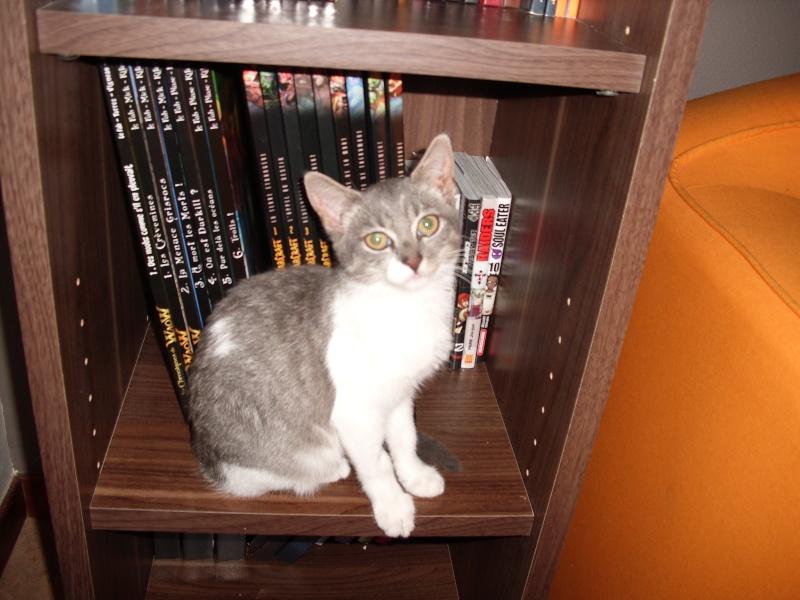 lucy le chat Dsci0210