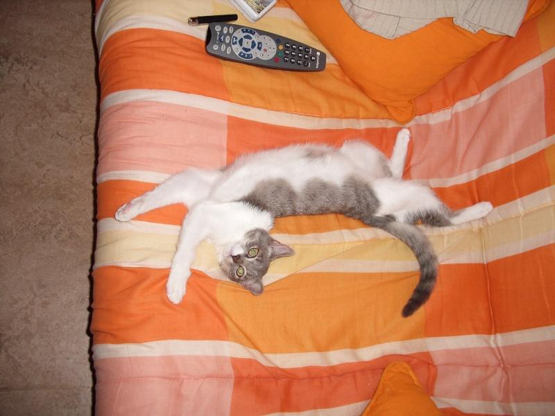 lucy le chat Dsci0211