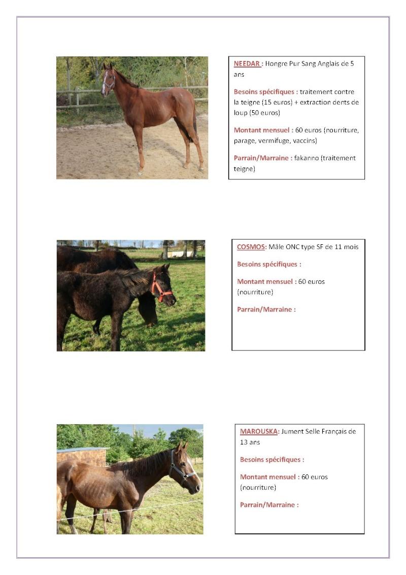 Parrainage chevaux 2013 Parrai27