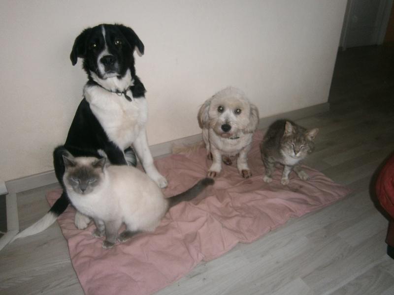 voici mes animaux   P2230313