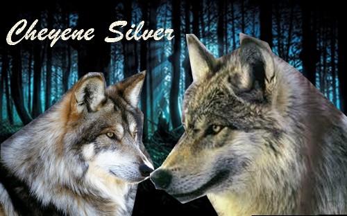 Fiches des loups Cheyen10