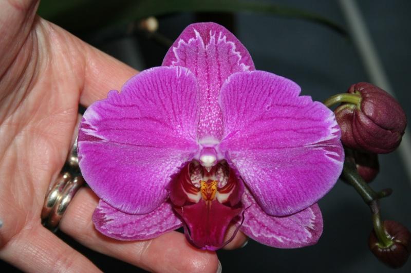 vente d'orchidée : je fais de la place pour les prochaines expo ! Img_5518