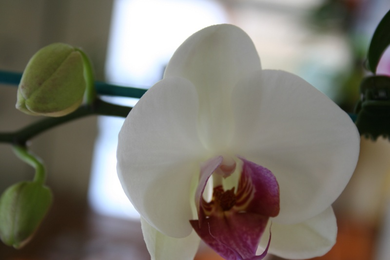 vente d'orchidée : je fais de la place pour les prochaines expo ! Img_5556
