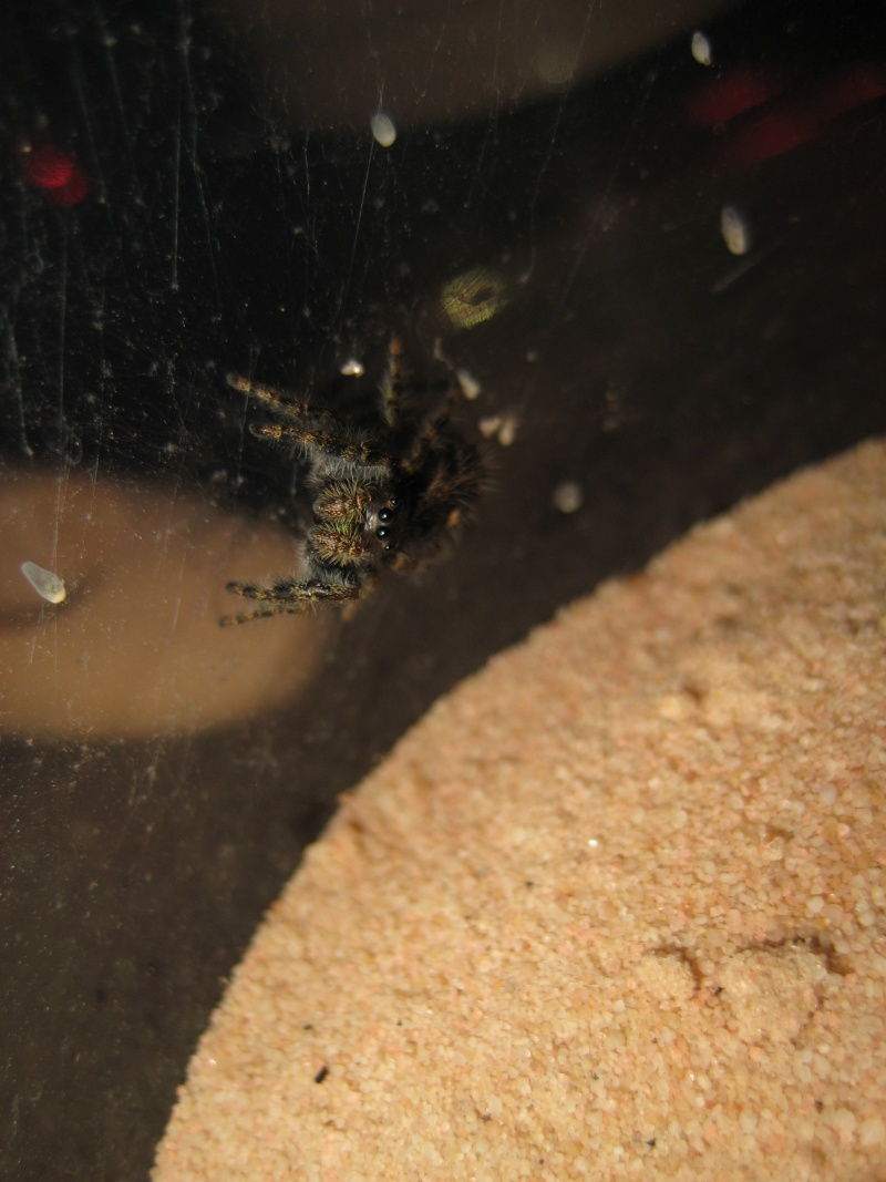 My Spider Collection Scopri10