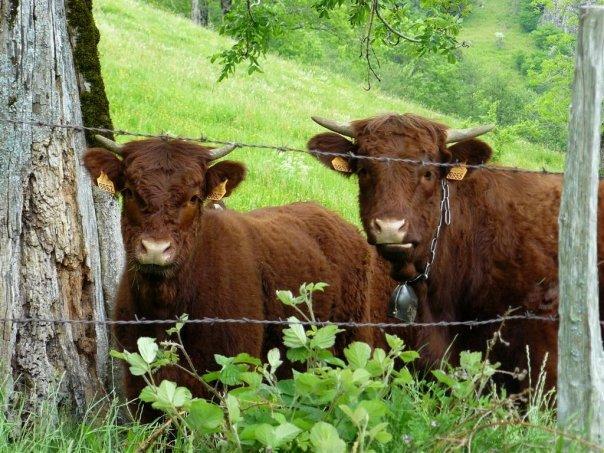 Balades dans le vert Cantal 4511_113