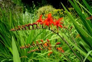 (35) Parc botanique de Haute-Bretagne - Le Châtellier 5568_110