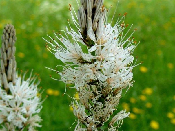 Balades dans le vert Cantal Blanch10