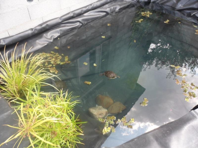 Construction bassin extérieur de Bibimawmi - Page 3 Sam_6315