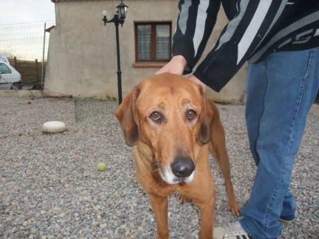 SOS adoption ou eutha pour Balou [Adopté] Bal_0010