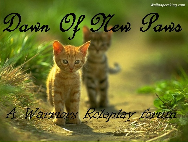 Dawn of New Paws