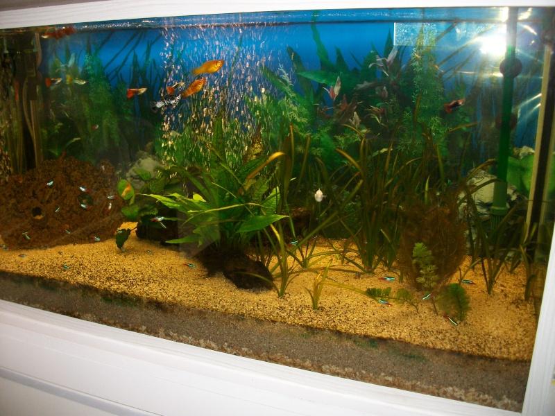 mon premier aquarium Imgp2212