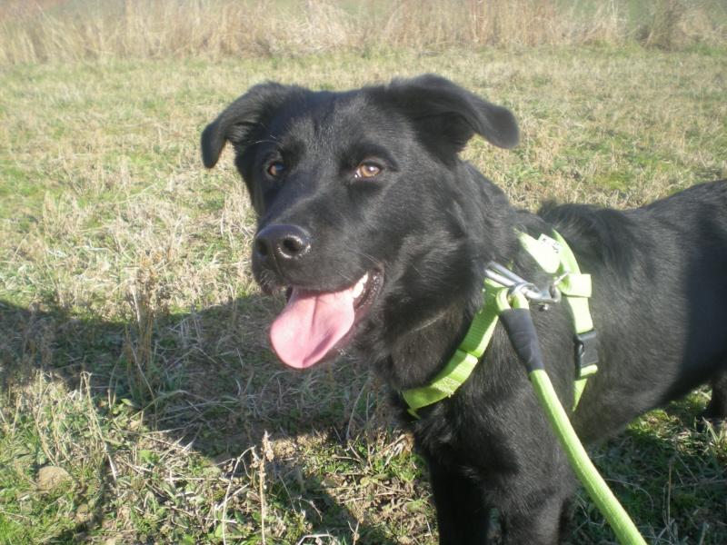 DARIK (mâle croisé labrador) Dscn5715