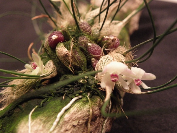 Miniatur- Orchideen - Seite 2 Isabel10