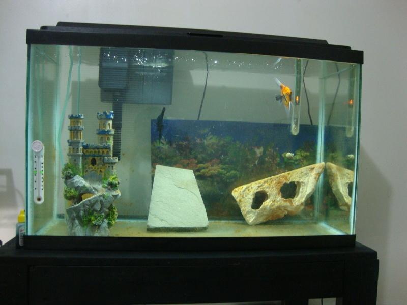 Fish Room pics Dsc05617