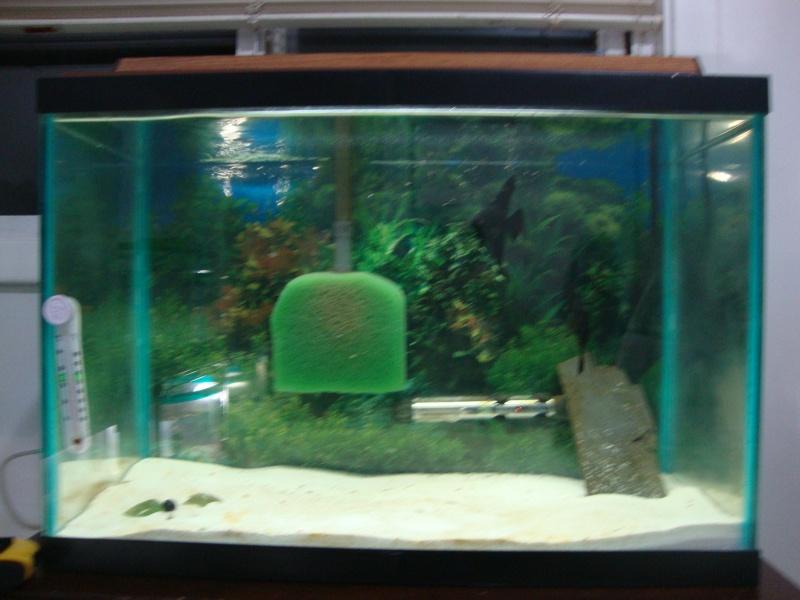 Fish Room pics Dsc05619