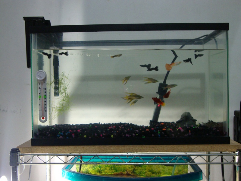 Fish Room pics Dsc05620
