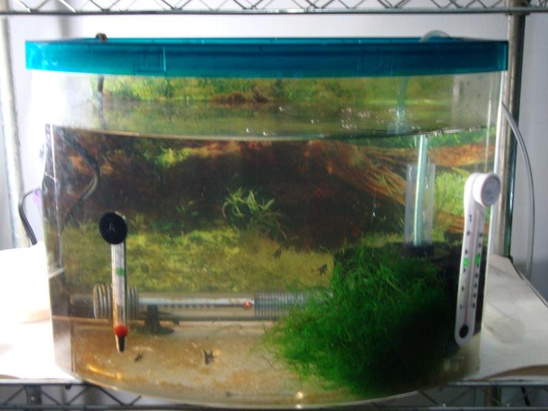 Fish Room pics Dsc05621