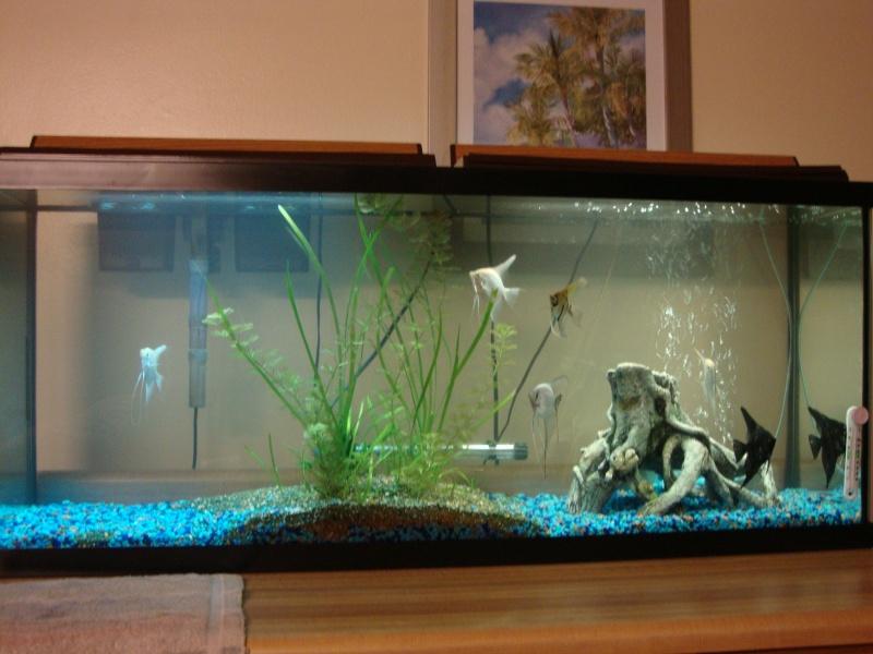 Fish Room pics Dsc05622