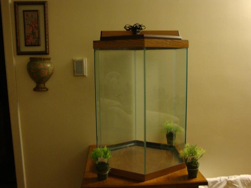 Fish Room pics Dsc05623