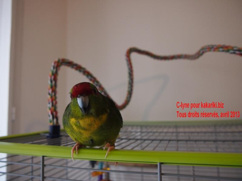 Meiko, notre petit héros à plumes P4052610