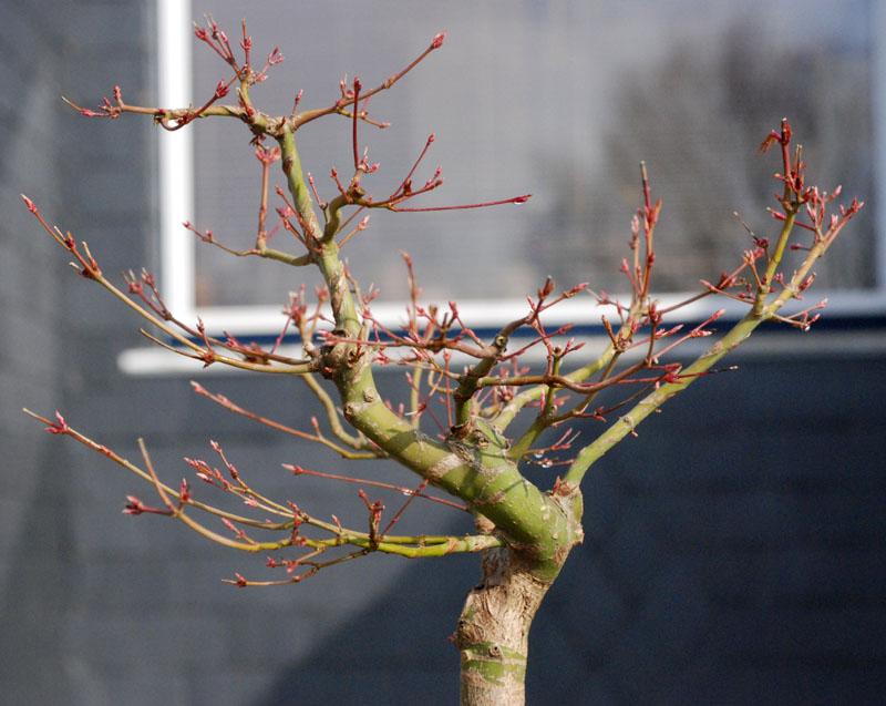 Conseils pour mon premier pré-bonsaï Dsc_0012