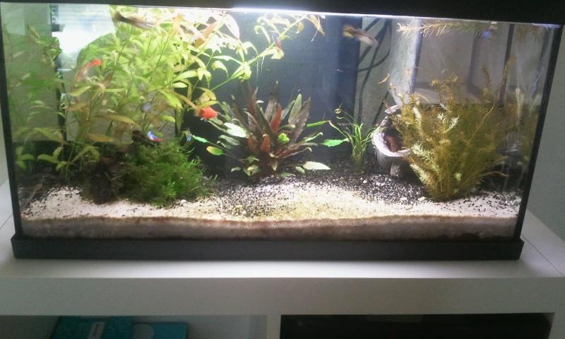 Mon premier aquarium 2013-011