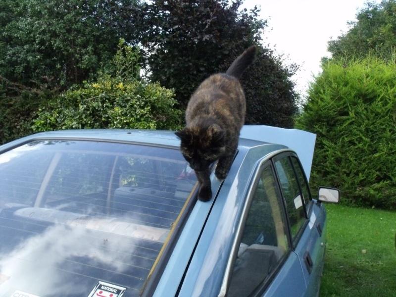 Ce chat me cherche... - Page 2 73520110