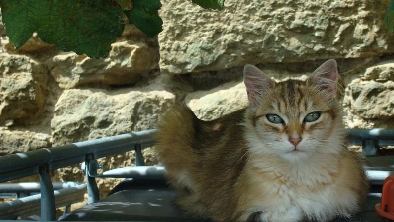 Ce chat me cherche... - Page 2 Dsc00312