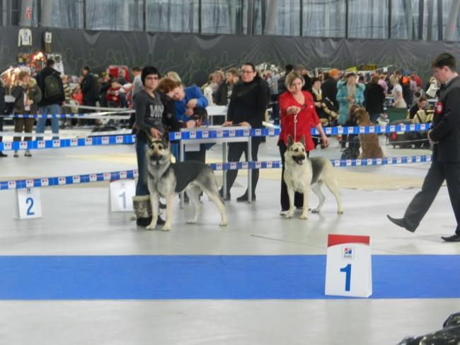ВОСТОЧНО-ЕВРОПЕЙСКАЯ ОВЧАРКА АМАНАУЗ ЛАРИНА 316010