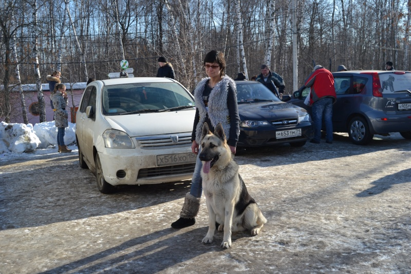 ВОСТОЧНО-ЕВРОПЕЙСКАЯ ОВЧАРКА АМАНАУЗ КИНГ ВЕОЛАР Dsc_0617