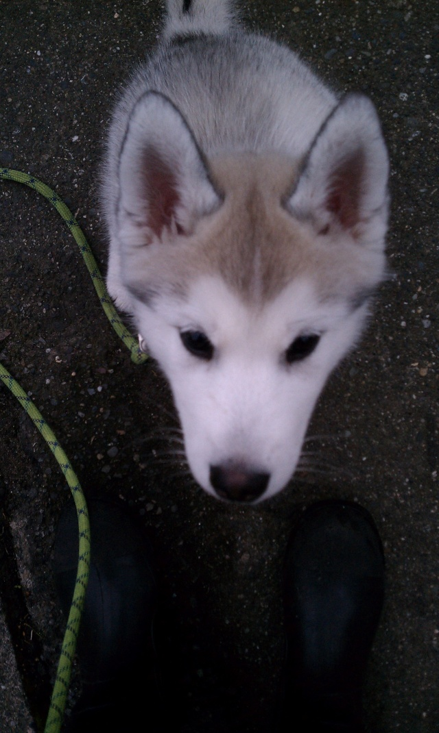 [Scrapbook] Link the Siberian Husky - Page 5 Imag1134