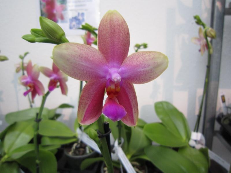 Orchideenausstellung Frankfurt Palmengarten Img_1610