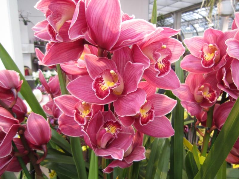 Orchideenausstellung Frankfurt Palmengarten Img_1710